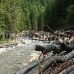 PROIECT: Compensaţii băneşti pentru marii proprietari de păduri