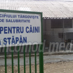 DÂMBOVIŢA: Doctorul veterinar Alen Georgescu a cerut audit la adăpostu...