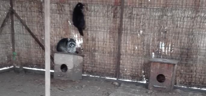 zoo potlogi 1