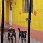 ANUNŢ: Angajăm medic veterinar pentru adăpost animale în Târgovişte