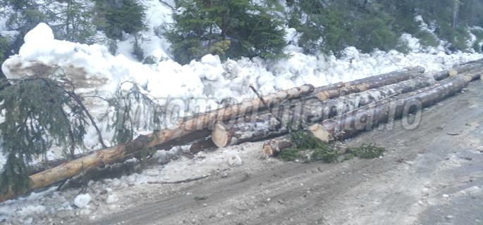 depozit lemn drum dichiu 2