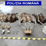 PERCHEZIŢII: 51 de trofee de vânătoare, confiscate de poliţiştii din A...