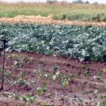 PROCES: Agricultorii ar putea să scape de taxa pe apa folosită pentru ...