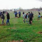 FOTO: 150 de voluntari au plantat 3.000 de puieţi de arbori în comuna ...