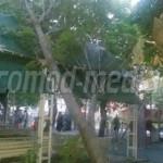 TÂRGOVIŞTE: Un arbore s-a prăbuşit în zona locurilor de joacă pentru c...