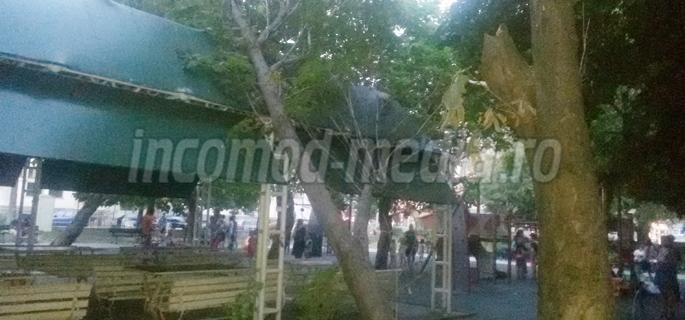 arbore parcul mitropoliei 3