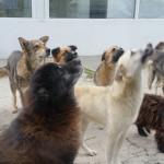 DONEAZĂ ŞI TU mâncare pentru câinii din Adăpostul Wonderland!