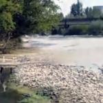 DÂMBOVIŢA: SC Marchand SRL vine cu precizări în cazul poluării râului ...