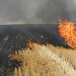 CĂLĂRAŞI: 100 de intervenţii în trei zile! Pompierii au lucrat la foc ...