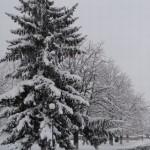 curtea domneasca iarna