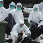 ATENŢIE! Comerţul cu păsări şi ouă a fost interzis în Bucureşti din ca...