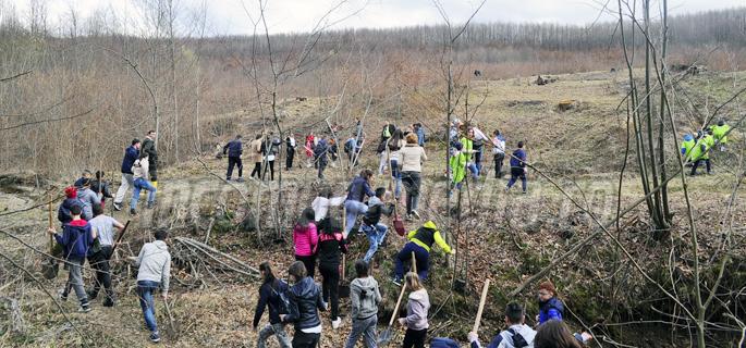 plantare arbori ludesti 4