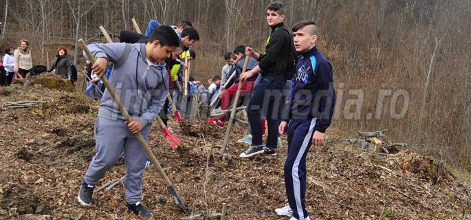 plantare arbori ludesti 5