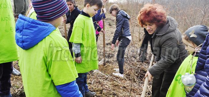 plantare arbori ludesti 6