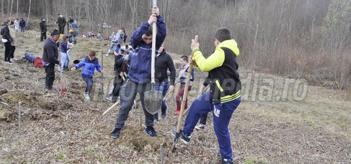 plantare arbori ludesti 7