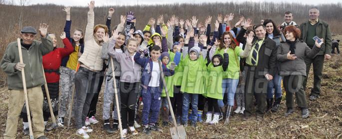 plantare arbori ludesti 8