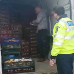 DÂMBOVIŢA: Transport ilegal de pâine, interceptat la Bâldana!