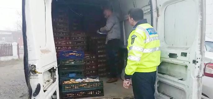 transport ilegal paine