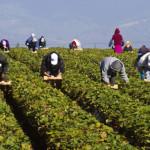 JOBURI: Danezii caută în România personal pentru ferme, curăţenie şi c...