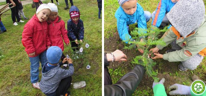 plantare arbori fieni 2