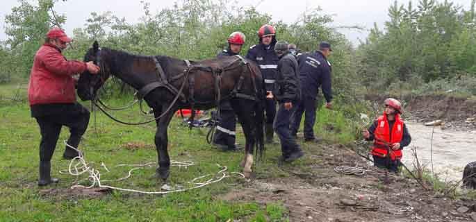 salvare cai prahova 2