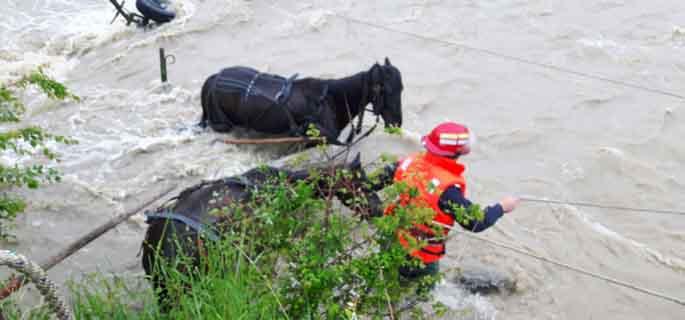 salvare cai prahova 4
