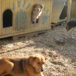 UPDATE: Poliţia Locală Târgovişte amendează proprietarii de câini... l...