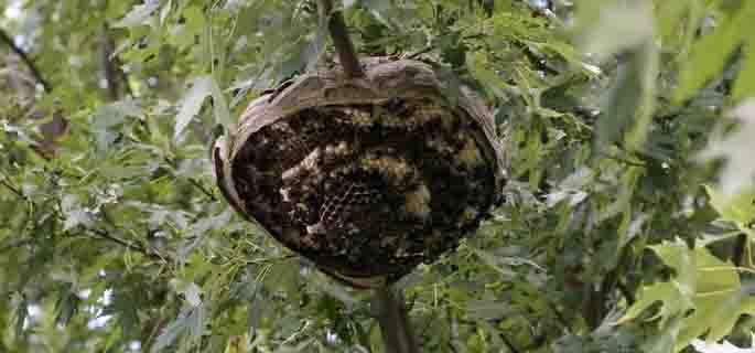 FOTO ARHIVĂ (/ochiulcarerade.files.wordpress.com)