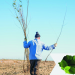 PROTOCOL: Parteneri pentru natură! Împăduriri fără impact negativ asup...