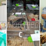 ARGEŞ: Câinii şi pisicile din oraşul Topoloveni şi împrejurimi vor fi ...