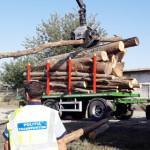 IALOMIŢA: Vagon de tren, încărcat cu lemne fără acte de provenienţă!