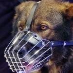 Faceţi cunoştinţă cu REF, câinele care a salvat o copilă de 2 ani disp...