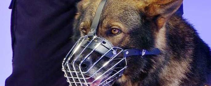 Ref, câinele-erou de la Prahova (Sursa foto: Antena3)