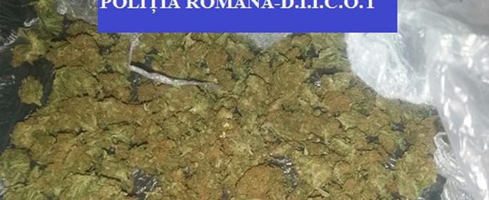 muguri cannabis