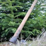 ANALIZĂ: Furturile de brazi de Crăciun au scăzut cu 42%! Şi tot au fos...