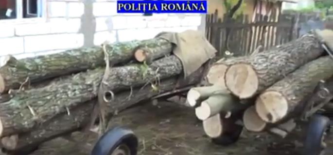 perchezitii hoti lemne 2