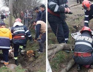 TELEORMAN: Arbore de pe marginea drumului, prăvălit de un tractor peste o fată de 14 ani!