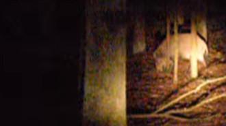 FOTO ARHIVĂ (sursa: captură YouTube)