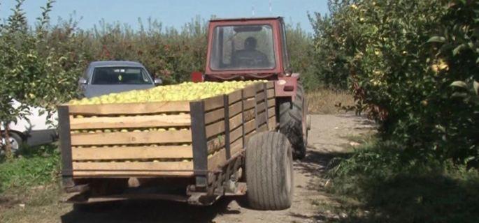 mere-2-agricultura k