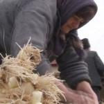 FONDURI: Guvernul a alocat 200 de milioane de lei pentru sprijinirea a...