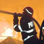 CĂLĂRAŞI: 70 de bovine scăpate din flăcări de pompierii militari