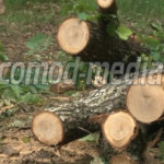 RAZIE: 82 de percheziţii în domeniul silvic! Se acţionează simultan în...