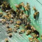 HOTĂRÂRE: Guvernul a extins programul de sprijin pentru apicultori