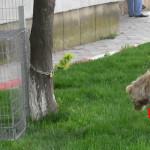 DÂMBOVIŢA: Barbarie pe străzile Găeştiului! Câinii maidanezi sunt înju...