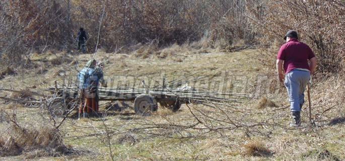 furt lemne 6