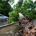 INFO UTIL: Ce faci dacă vântul a doborât un arbore pe maşina ta?