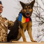 PIERDERE: Max, câinele-erou al Armatei Române a fost înmormântat cu on...