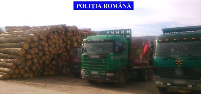 perchezitii hoti lemne 1