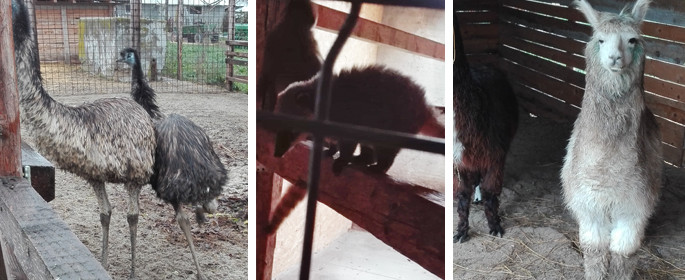 zoo potlogi 2