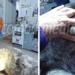 CRUZIME: Câine, înjunghiat pe o stradă din Târgovişte! Agresorul nu es...